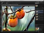 PaintSupreme Fast Photo Editing - 2D Software, Shareware